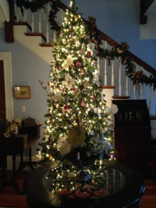 Trimmed Tree!